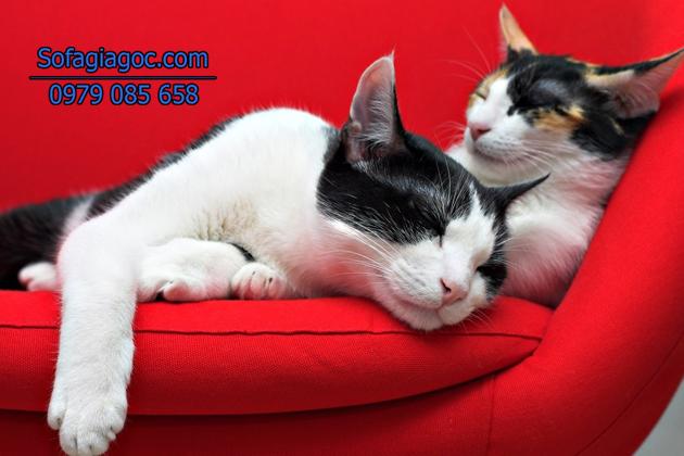 Sofa đỏ là sự lựa chọn tuyệt vời thể hiện cá tính và phong cách của gia chủ