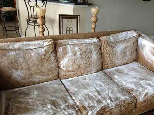 Vệ Sinh Ghế Sofa Da Khi Bị Nấm Mốc